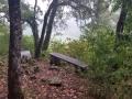 Bois du Vieux Taillis