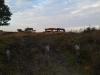Witsemdijk