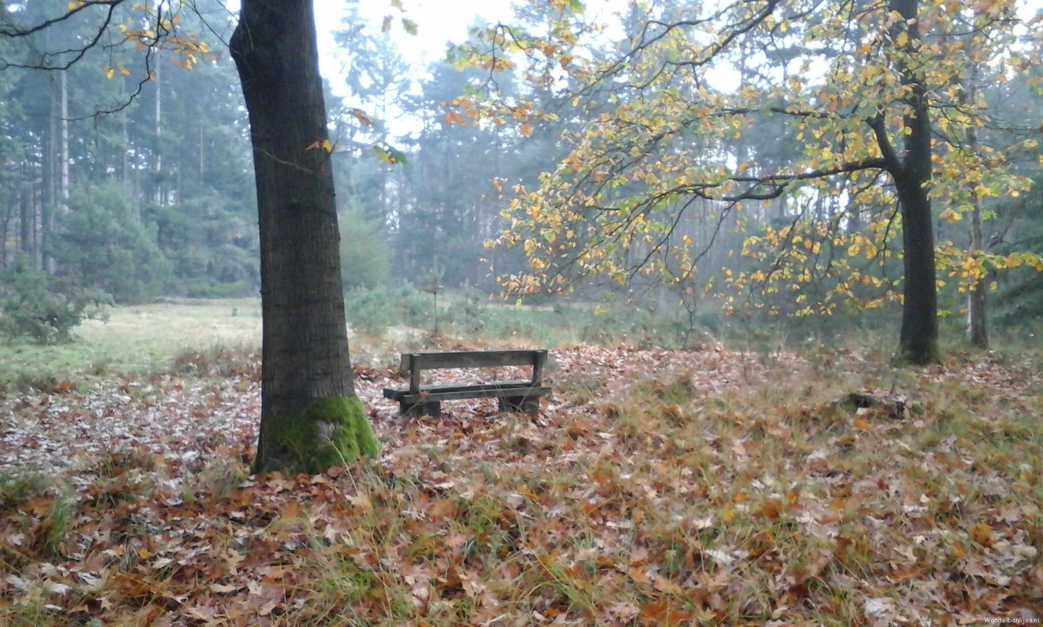 rt-verhoeven_marij-walking-bench-in-the-ripse-woods-walking-benches-httpst-cowtzcwlycnp
