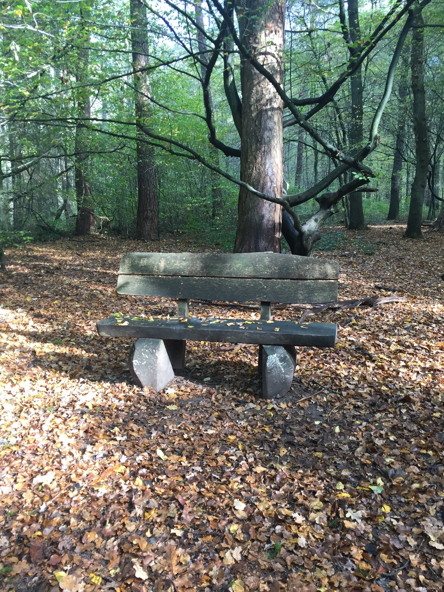 rt-mhaantas-walking benches-very-many-german-walking benches-in-the-konigsforst-autumn-httpst-coubcletqpzq