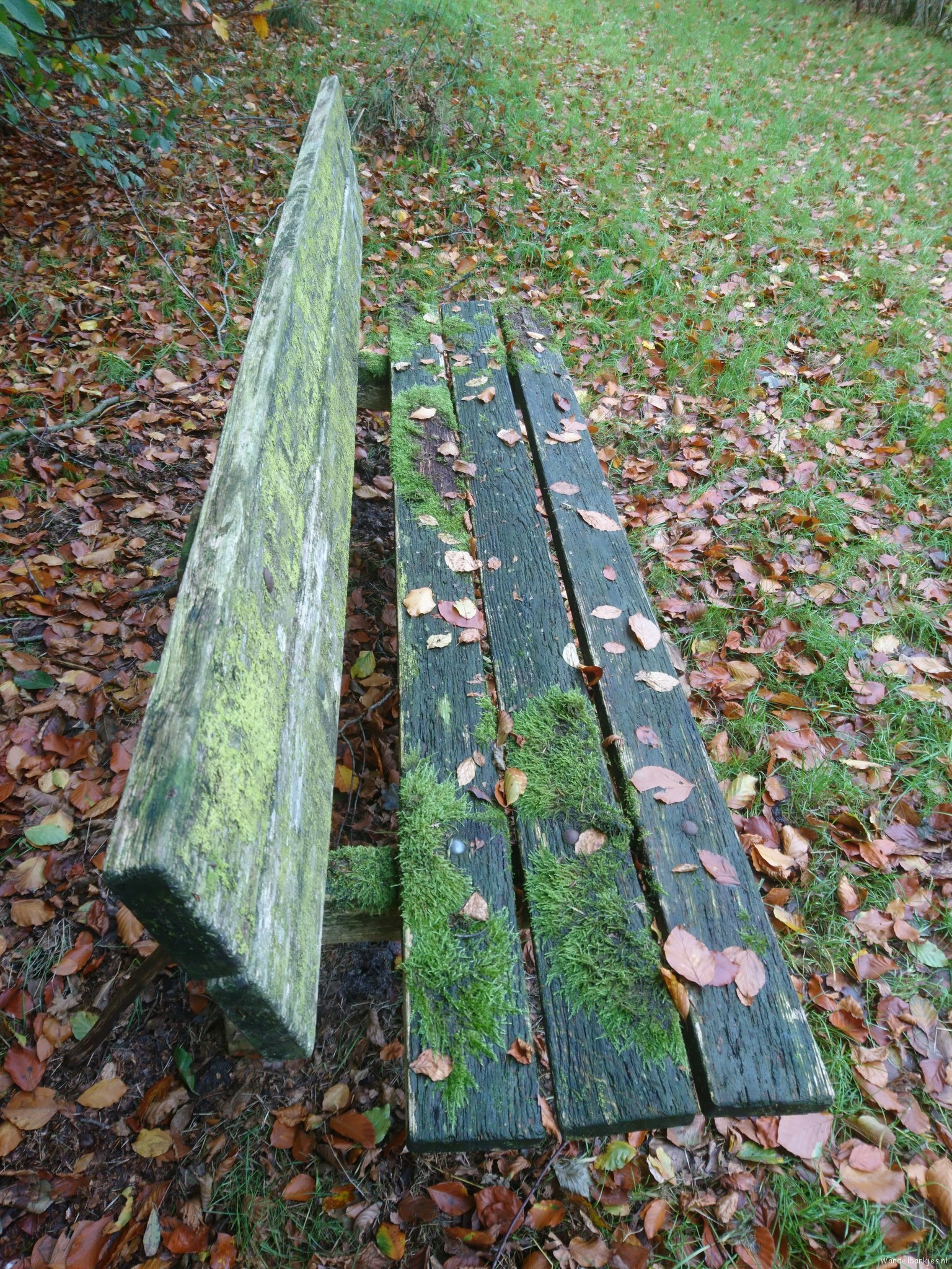 rt-walburgism-walking-benches-noaberpad-peat-deep-through-the-mosses-and-lichens-unobtrusive-present-in-the-beautiful-westerwolde-httpst