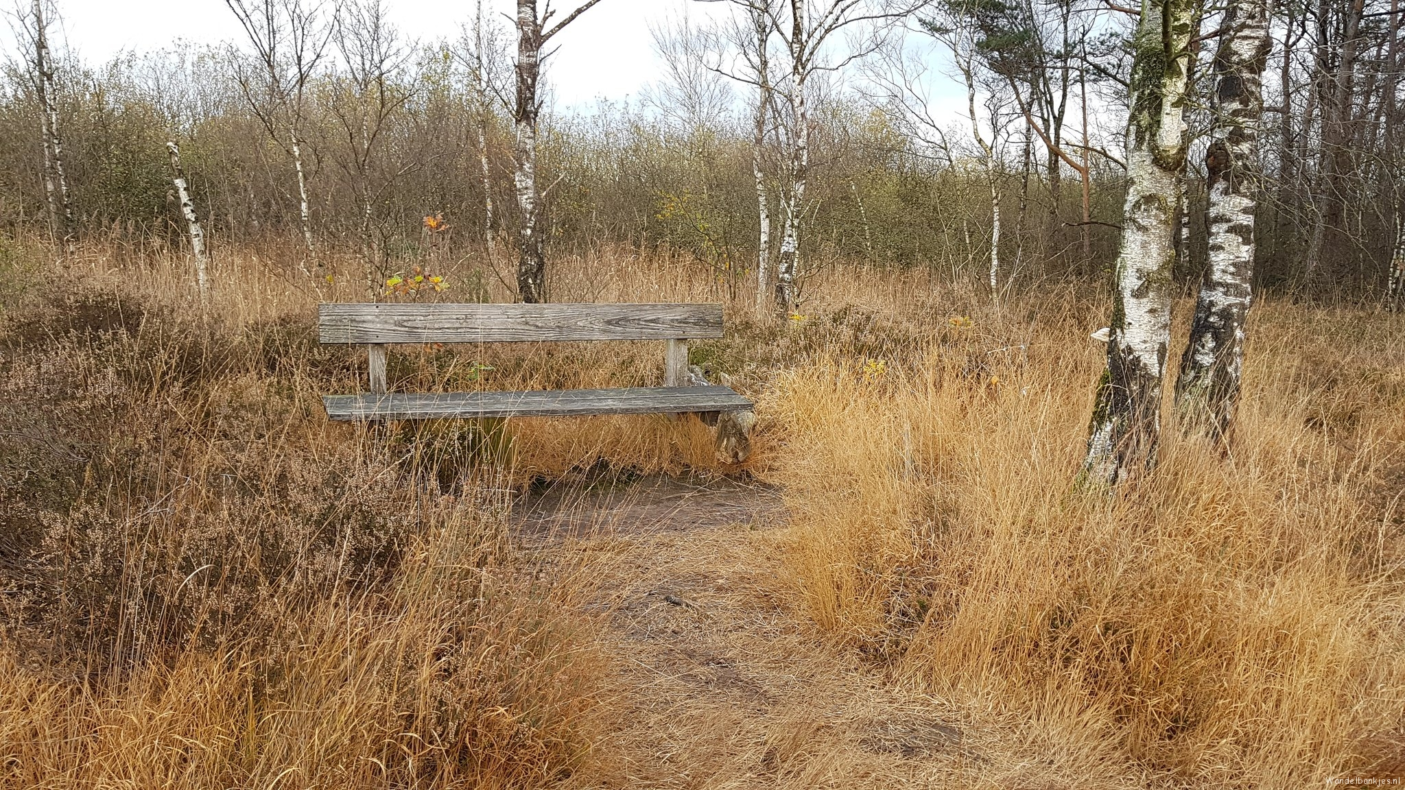 rt-sthart80-walking-benches-in-the-meddoseveen-te-winterswijk-achterhoek-httpst-codkehmheltg