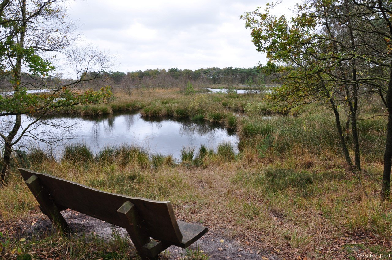 rt-walkfrom-hiking-benches-walkersbenches-delleboersterheide-and-diakonief-itfryskegea-httpst-coawosg9q72p-httpst-conthh7