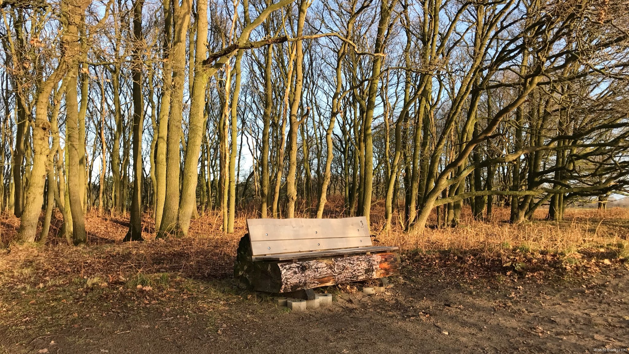 rt-boerleen-just-enjoyed-of-this-walk-bench-in-the-amsterdam-waterleidingduinen-at-the-zilkawd-hikes-dunes-https-t