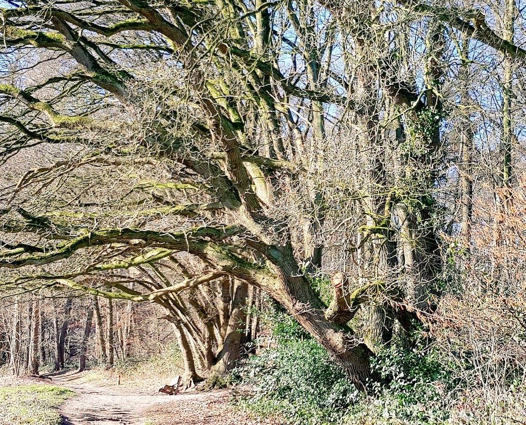 rt-wolfswandelplan-heerlijkheid-beek-elyzeese-velden-wandelbankjes-https-t-co-rwdu1xtwpo