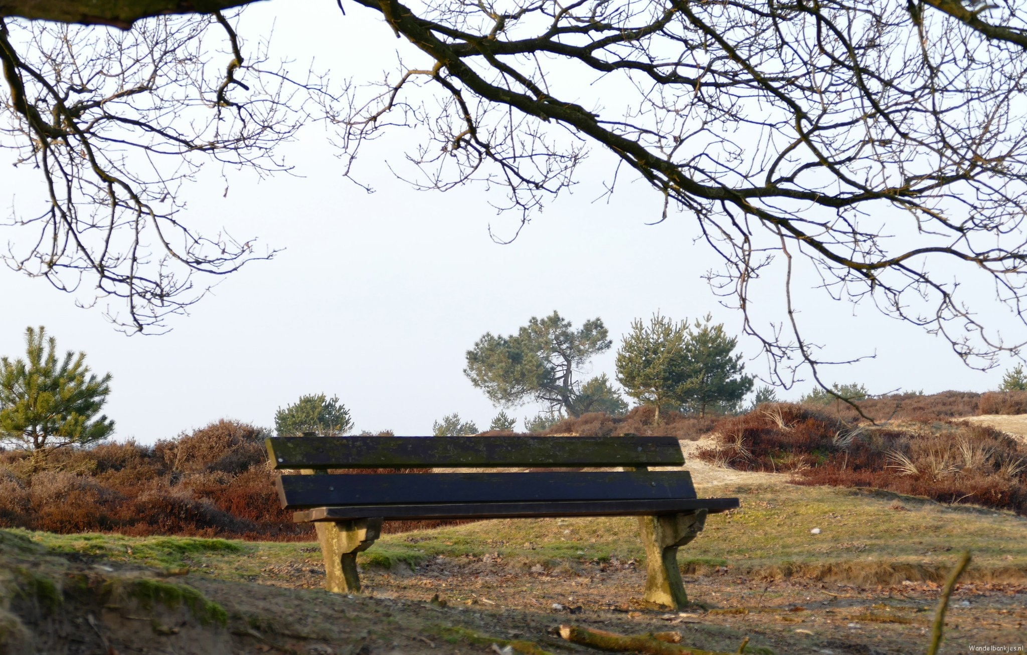 rt-umoja4-wandelbankjes-walkersbenches-staatsbosbeheer-nationaalparkdf-aekingerzand-winterwandeling-february21st-https-t-co-tcbp
