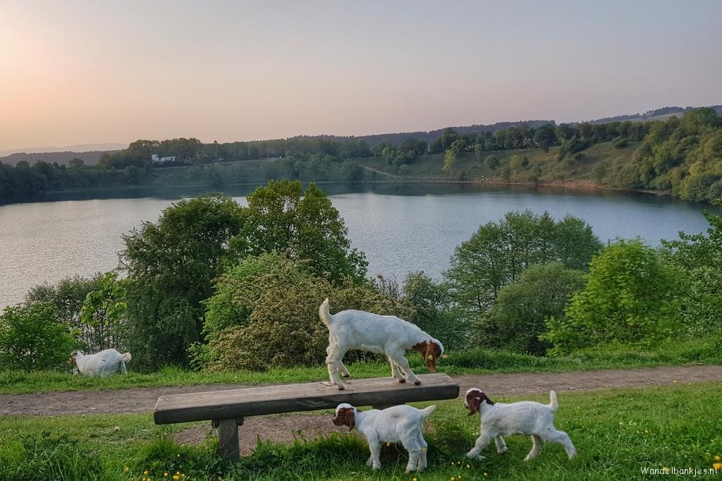 rt-wolfswandelplan-weinfelder-but-at-daun-in-the-eifel-walking-benches-https-t-co-07ktnp8eoy