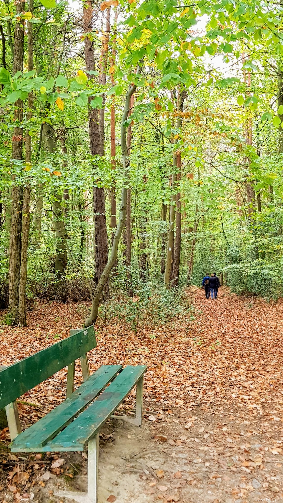 rt-wolf-walking-plan-beech forests-at-ahrweiler-walking benches-https-t-co-rzfxyz12gq