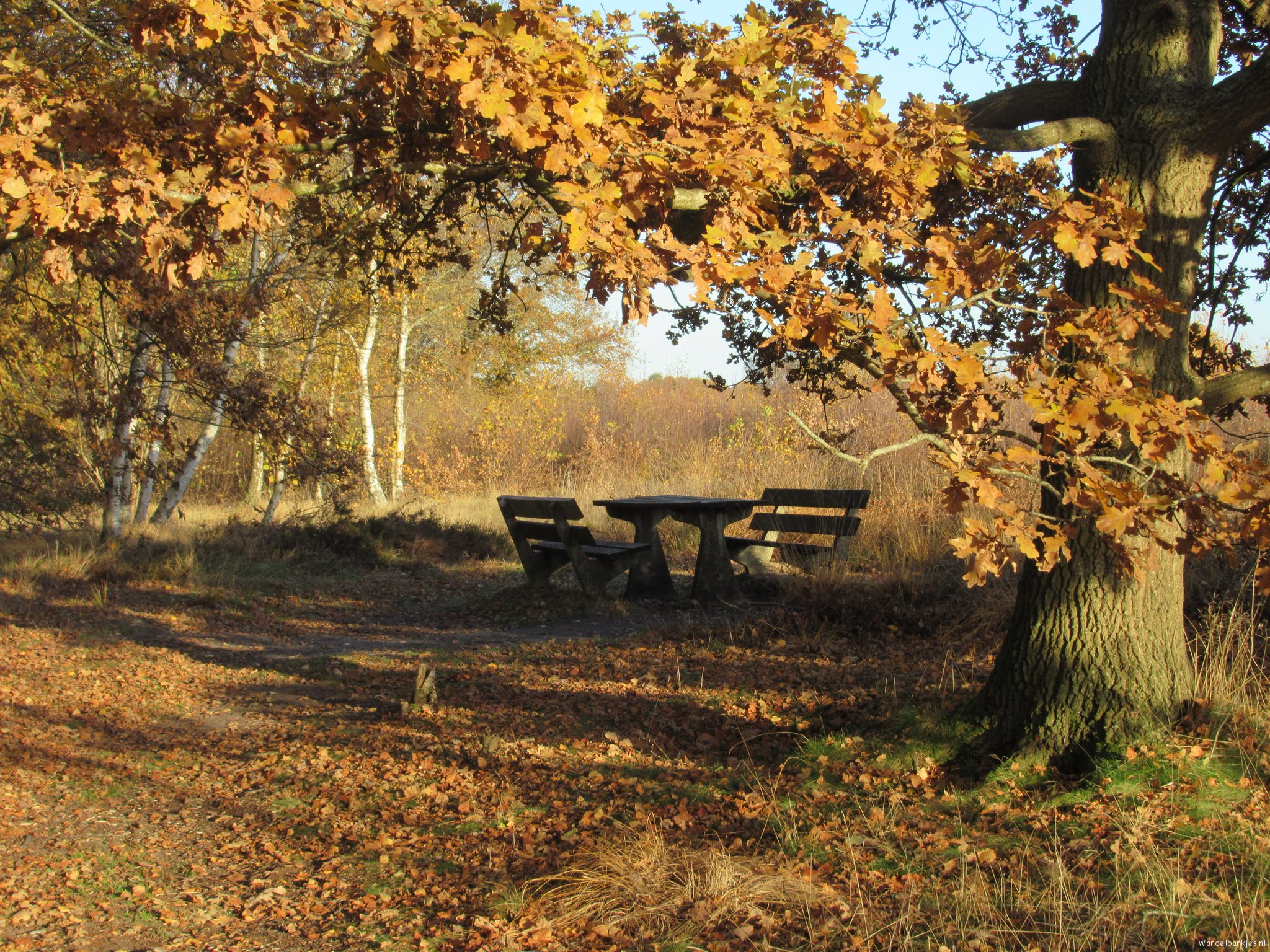 rt-mariaheukers-a-sunny-autumn day-walking benches-balloerveld-drentscheaautumn-500pxrtg-https-t-co-l1337vi7dy