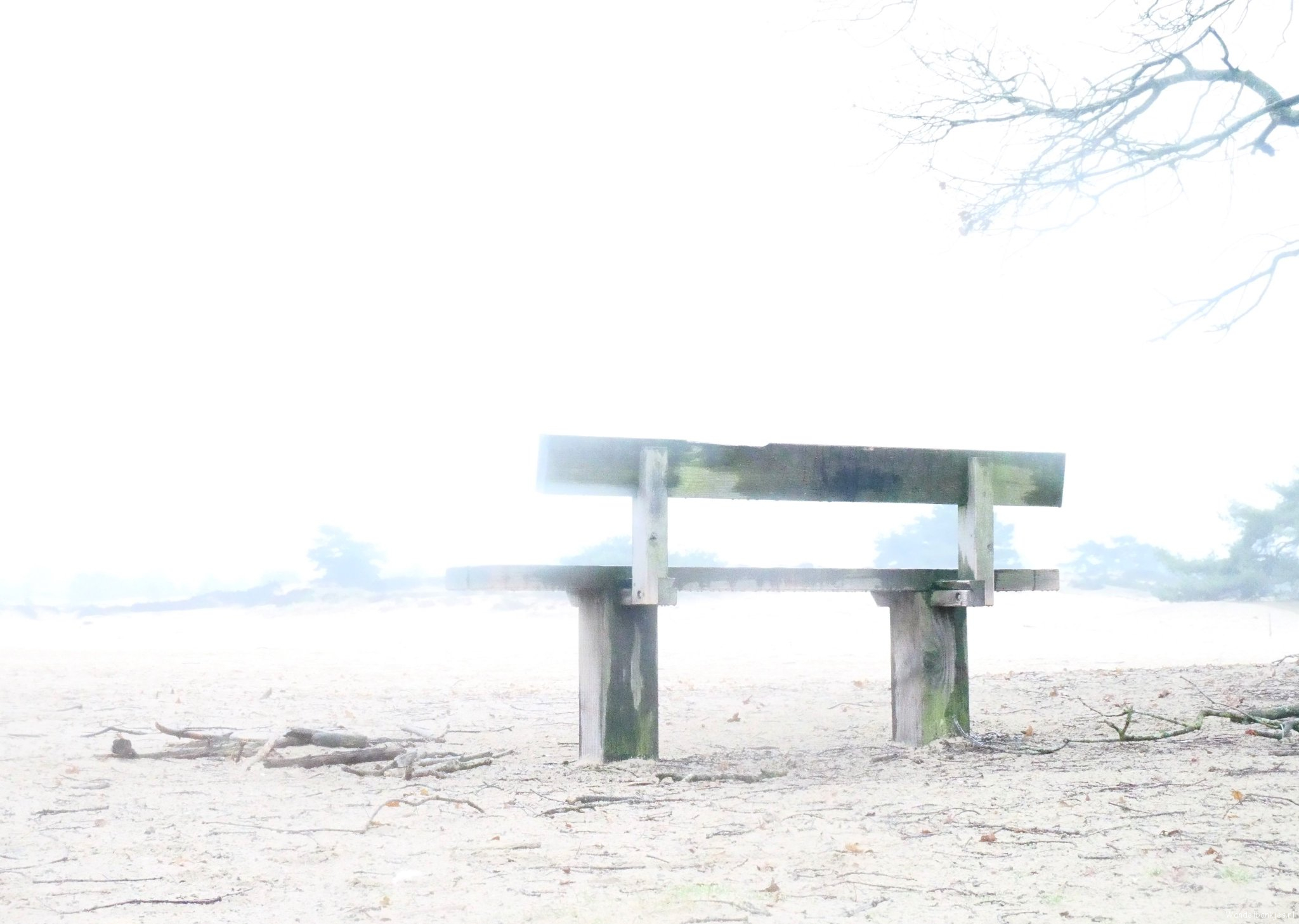 rt-umoja4-myfavebench-wandelbankjes-walkersbenches-staatsbosbeheer-aekingerzand-kaleduinen-photography-nature-highkey-https-t