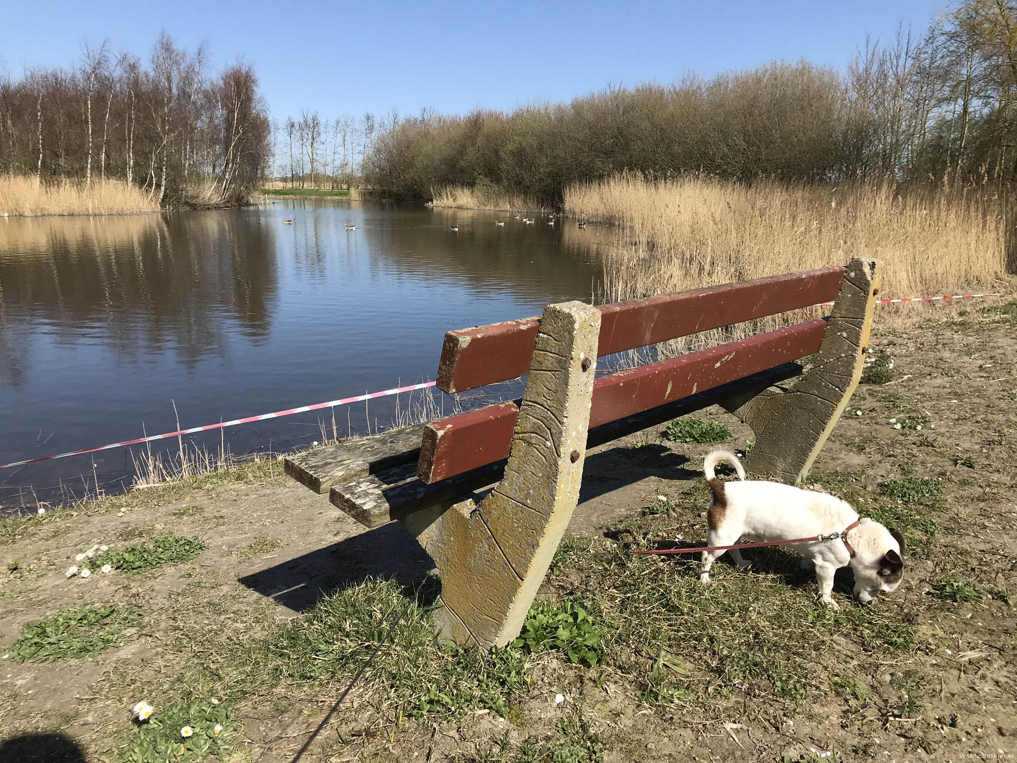 rt-peterboomsma-for-walking benches-even-the-dog-walk-in-the-hemmemapark-in-berltsum-https-t-co-fl8jrj3iey