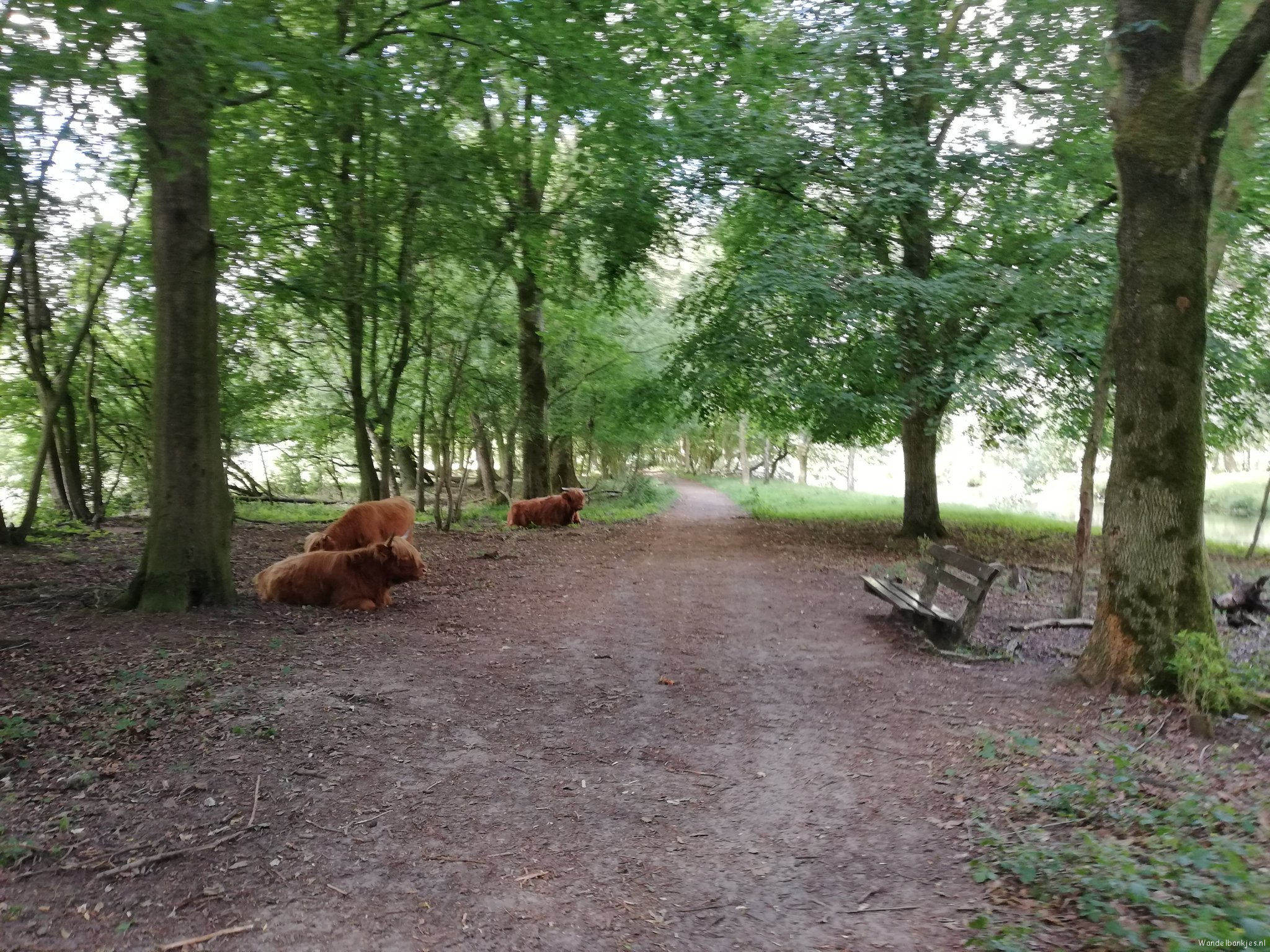 rt-walburgism-monday-morning-walk-city-park-gem_groningen-scottish-highlanders-and-bench-walking benches-wanderlust-https-t-co-imh
