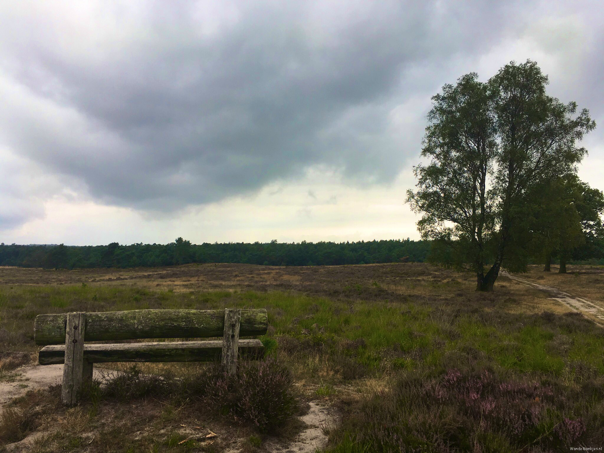 rt-verweij_i-hello-rust-veluwe-parts-walking-% f0% 9f% a5% leg-that-on-black-Saturday-walking benches-https-t-co-rfrwurow0n