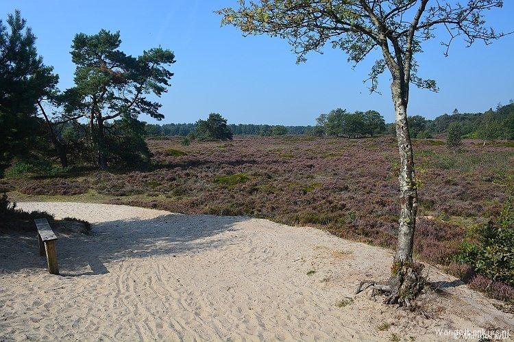 rt-mauricekruk-wandelbankjes-bakkeveense-duinen-bakkefeanster-dunen-bakkeveen-opsterland-frl-https-t-co-j5ekosryv5