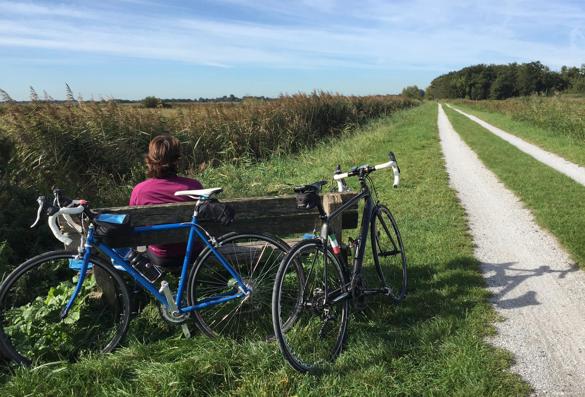 rt-westalet-lovely-bike-or-walking benches-along-the-canal dyke-at-tenhoven-with-free-gooseconcert-https-t-co-g0mwyq3akw