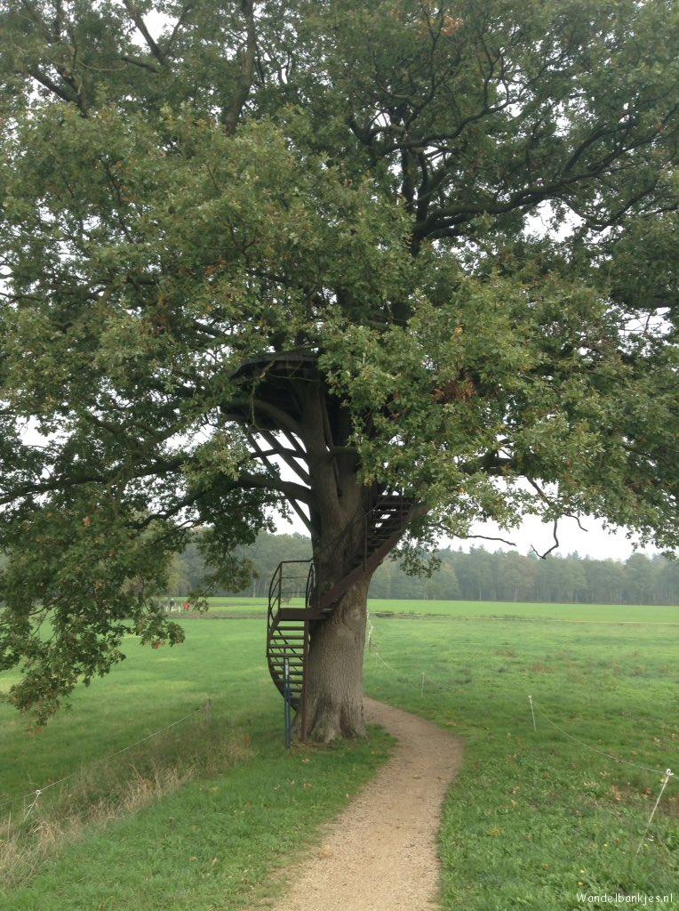 rt-rensevdvelde-stokkum-wandelbankje-in-een-boom-wandelbankjes-https-t-co-snvhbm0v2k