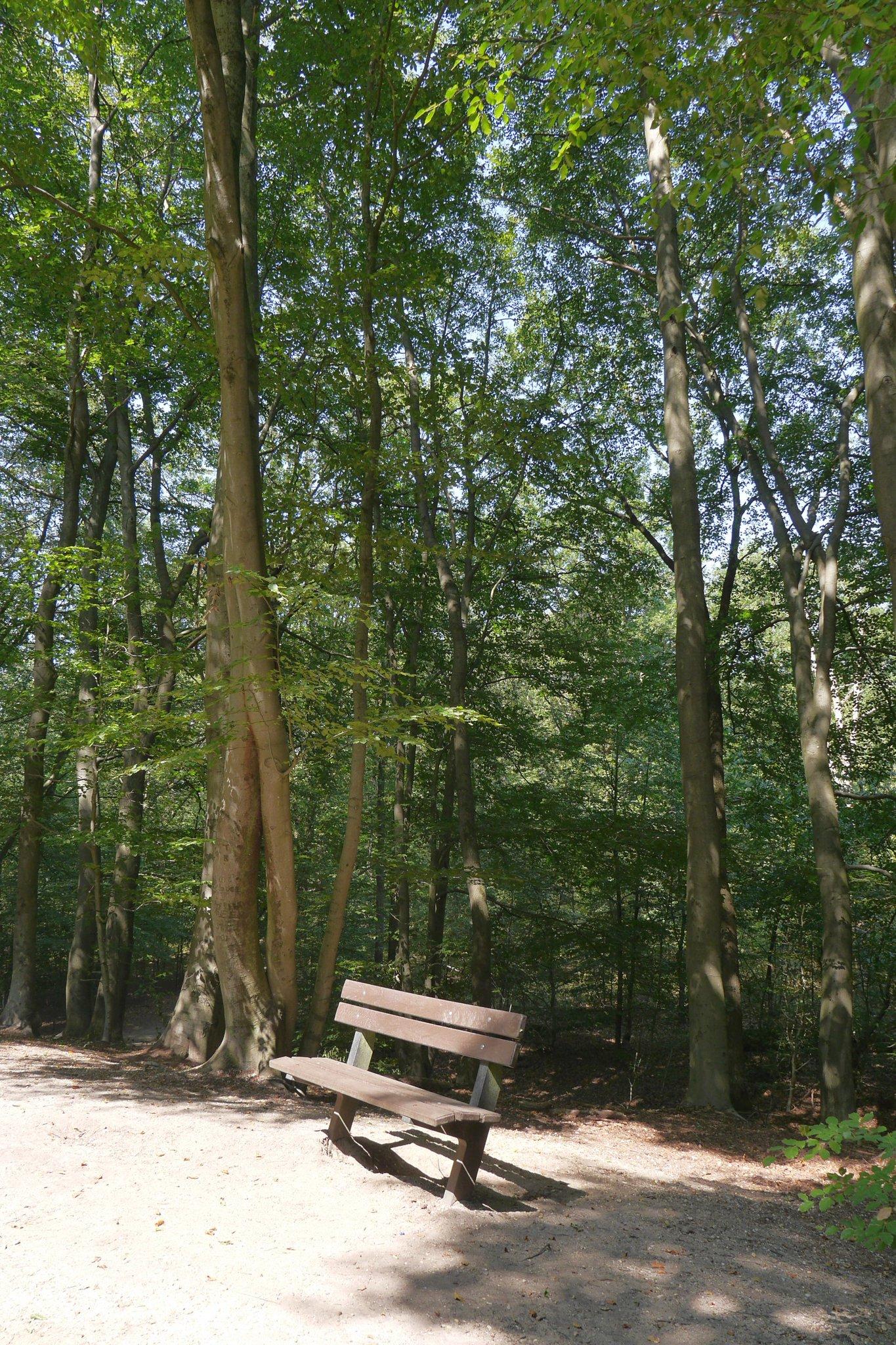 rt-arthurskm-voor-walkersbenches-en-wandelbankjes-in-de-bossen-achter-nijmegen-https-t-co-wvjyh7m9ck