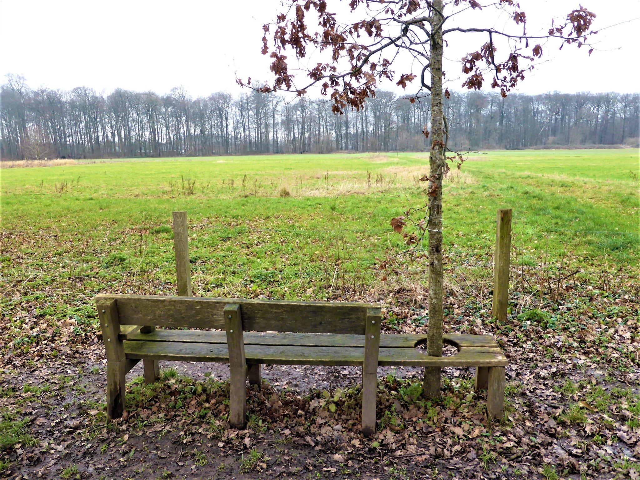 rt-willemwandelt-een-boom-zit-05-02-2021groene-wissel-bunnikwandelbankjes-wandelbankjes-driebergen-https-t-co-yeygjcxgqp