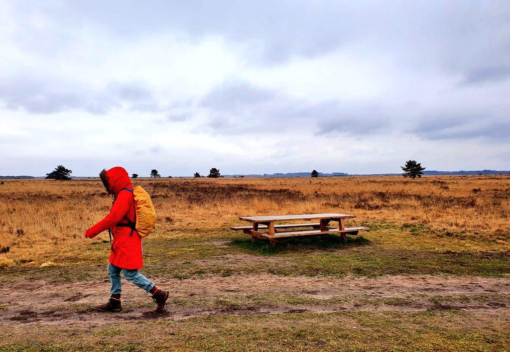 rt-wolfswandelplan-speulder-en-houtdorperveld-ermelo-wandelbankjes-https-t-co-agilktuu17