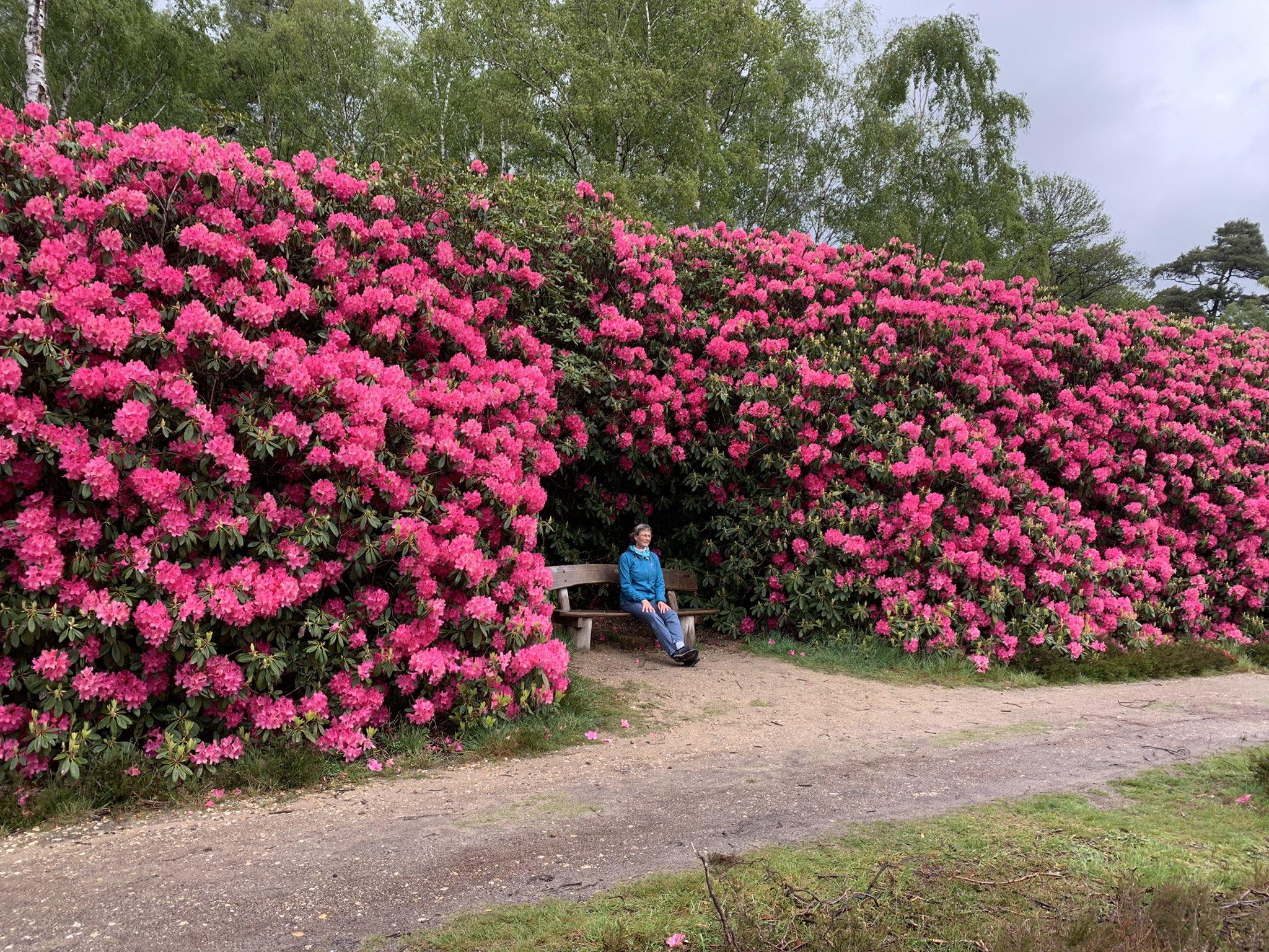 rt-katjastaartjes-een-van-de-mooiste-wandelbankjes-van-nederland-staat-vlakbij-ons-huis-%f0%9f%8c%ba-sallandseheuvelrug-sprengenberg-haarle-ht