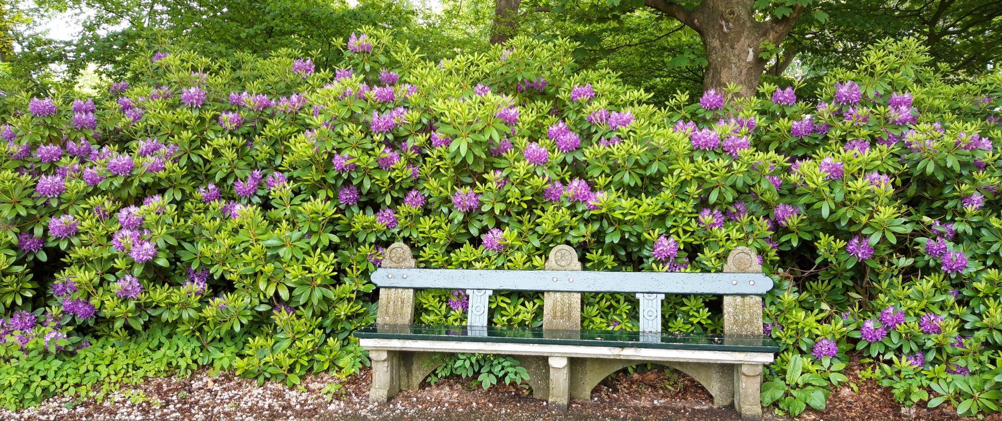 rt-karingibcus-ff-zitten-tussen-de-rhododendrons-in-het-stadspark-groningen-wandelbankjes-https-t-co-kdnrpij7ad